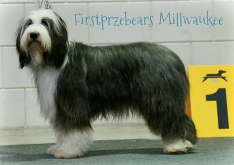 Firstprizebears Millwaukee